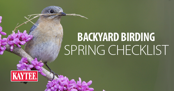 Backyard Birding Spring Checklist