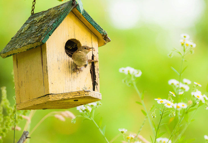 Attracting Wild Birds to your Yard in Spring
