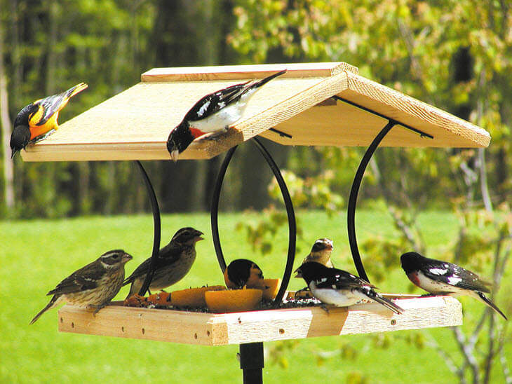 Birds at Bird Feeder