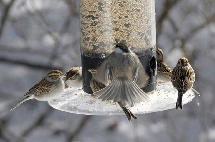 Feeding Wild Birds at Bird Feeder