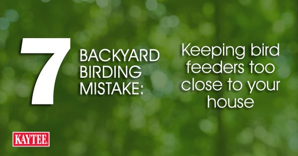 Keeping bird feeders too close to your house